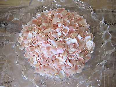 Crafters Imperfect Lg Apple Blossom Shells (1 1/2 cup) - (Seconds) Craft Shells