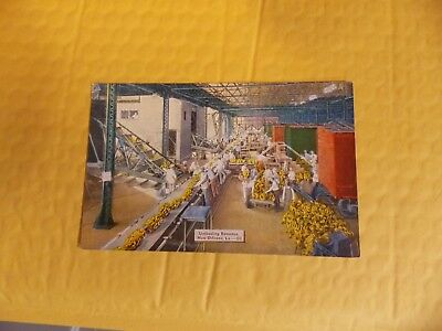 UNLOADING BANANAS  FROM SHIP SIDE   New Orleans LA  Postcard Louisiana  (LLL)