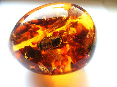 Egg - a souvenir with Baltic amber inside - FOSSIL INSECTS