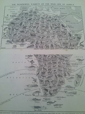 Map of Animals Wildlife Birds Fish of Africa 1924 2 Small Pages to Frame?