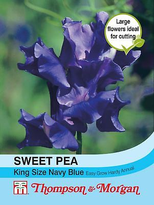 Thompson & Morgan - Flower - Sweet Pea King Size Navy Blue - 20 Seeds
