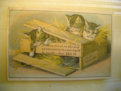 3 CATS IN CRATE small antique Victorian scrapbook PROVERB card CHROMOLITHOGRAPH