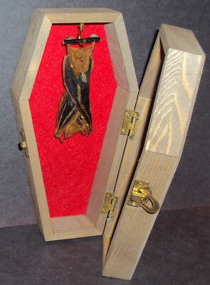 Real Hanging Bat in Wooden Coffin! Gothic Taxidermy! Nice Quiet Pet!