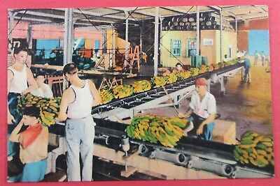 Unloading Bananas, From Ship Side, New Orleans, LA Postcard (#2001)