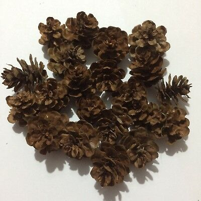 25 x Hemlock Mini Pine Cones 0.5-2.5cm Card Making Floral Craft Magnolia Wreath