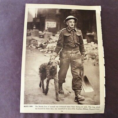Vintage Book Print - Blitz Dog OR Wartime Women - WWII - 1940s