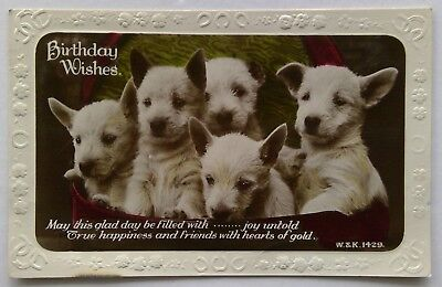 Birthday Wishes Puppies W.&K. 1429 Real Photo 1933 Postcard (P308)