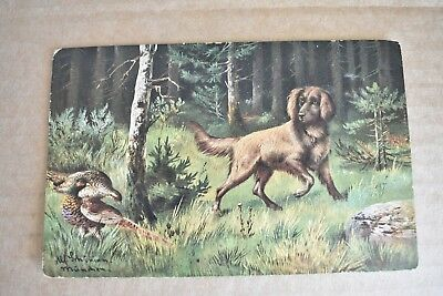 Early 1900s Red Setter Dog Hunting Pheasants Post Card