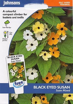 Johnsons - Pictorial Pack - Flower - Black Eyed Susan Susie Mixed - 25 Seeds