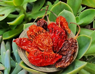 Ghost Pepper Pods Whole Dried Bhut Jolokia pepper chilli ~  100g Shanez