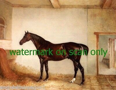 c1820 Magnificent Bay Hunter Horse in Large Barn Stall~NEW Large Note Cards