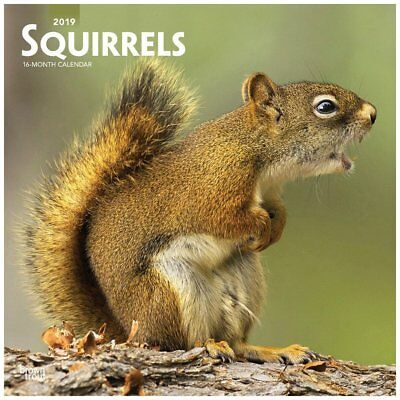 BrownTrout Squirrels Wall Calendar, Wildlife by Calendars