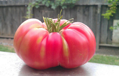 Tomato Brandywine Pink One Of The Best Tasting Tomatoes 30+ SEEDS HEIRLOOM