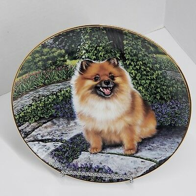 The Danbury Mint Pom in Bloom Barbara Higgins Bond Pomeranians Collector Plate