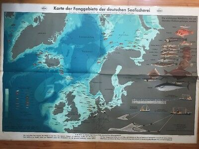Rare Vtg 1930s Museum Piece Map Of Fishing Areas Of The German Sea Fishing Color