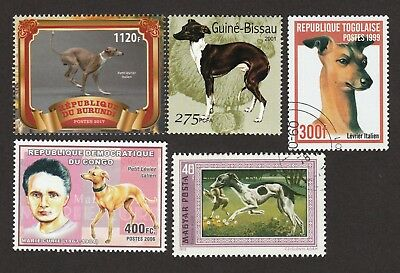 ITALIAN GREYHOUND ** Int'l Dog Postage Stamp Collection **Great Gift Idea**