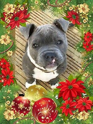 *Will you buy a Christmas dinner & toy for a rescued animal?  **Charity Appeal**
