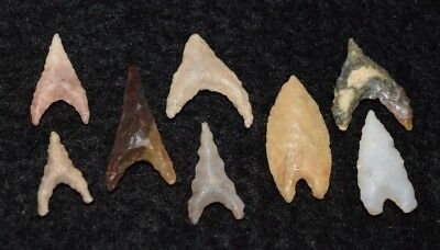 8 nice/small Sahara Neolithic triangular points, nice!