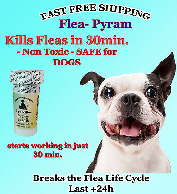100 CAPSULES Flea Killer FOR DOGS 40-80 Lbs. 47 Mg SUPER FAST Quick Results NEW