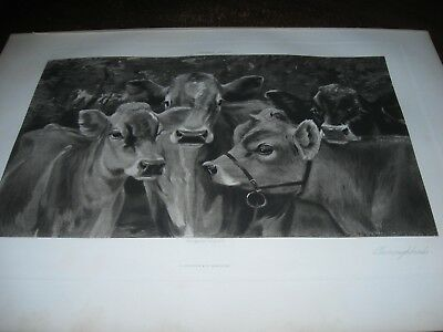 1890 Art Print ENGRAVING - JERSEY CATTLE Cows THOROUGHBREDS Cow DAIRY FARM