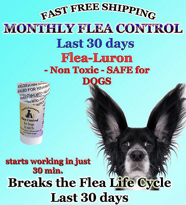 1 Year Supply MONTHLY Flea Control For DOGS 31-60Lbs.375 Mg 12 Capsules FAST S+H