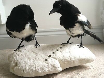 7ad6612c19667 TAXIDERMY PAIR OF MAGPIES mounted on rock set with crystals Two for Joy