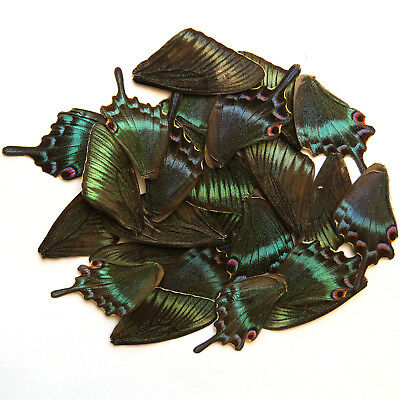 GREEN 32 pcs REAL BUTTERFLY wing material ooak fairy DIY artwork jewelry #6/_B
