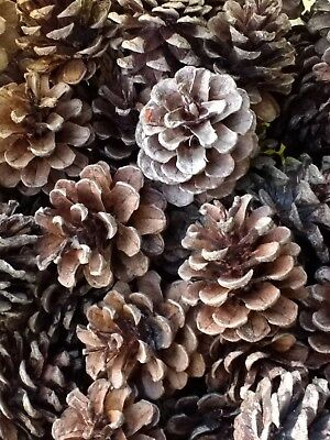 20 Red Pine cones for crafting, holiday decor, weddings, Christmas, and more!