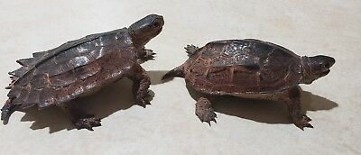 Lot of 2 AAA  Green Notched + ReevesTurtle Realistic Toy Reptile Model Replica
