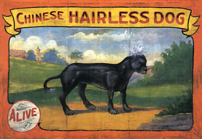 Vintage Freak Show Banner CHINESE HAIRLESS DOG WATERPROOF Side Show Circus