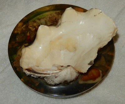 """Vintage Clam Shell Dish 7 X 5"""", Base Is 8-1/2"""" Diameter"""