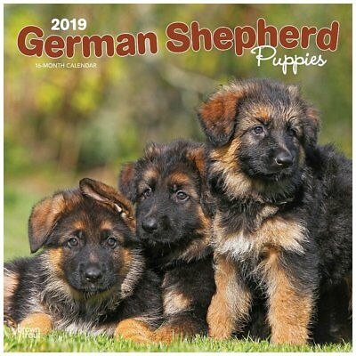 BrownTrout German Shepherd Puppies Wall Calendar, German Shepherd by Calendars