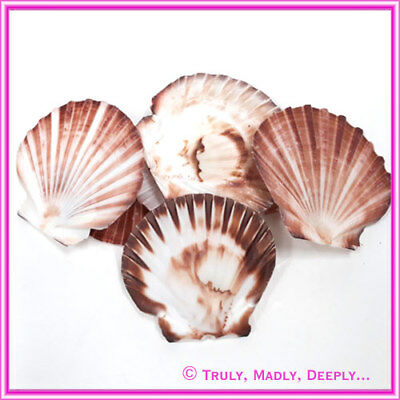 Shells Scallop White/Brown 100g - Approx 6-7 Shells per bag