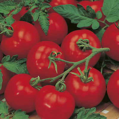 Vegetable Tomato Alicante 170 Finest Seeds #4585