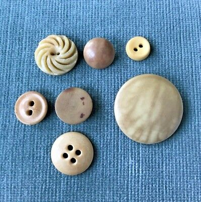 Lot of 7 Various Vintage Vegetable Ivory Buttons Cream Color 1.2 - 4 cm