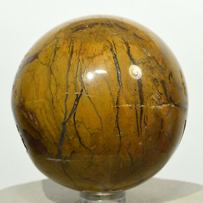"2.4"" Yellow Petrified Wood Sphere Natural Agate Crystal Fossil Mineral - India"
