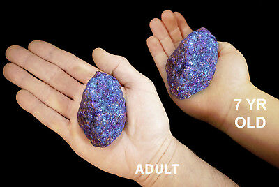 "Chalcopyrite 3"" 10-14 Oz Rock Mineral Specimen Rough Chakra Crystals Gemstone"