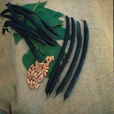 Kings Seeds - Vegetable - Climbing French Bean Cosse Violette - 70 Seeds