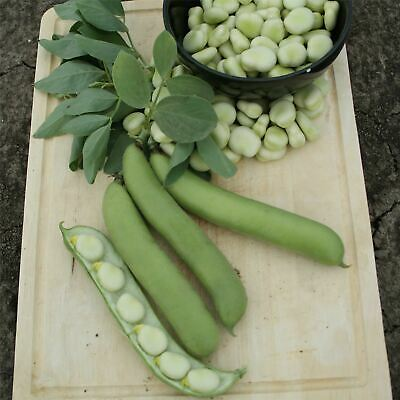 Kings Seeds - Vegetable - Broad Bean De Monica - 50 Seeds