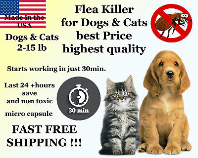 50 Capsules Instant Flea Killer Dogs / Cats 2-15lb 10mg + 1 FREE month CONTROL