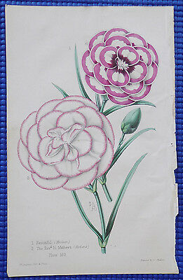 19th Century James Andrews Antique Flower Lithograph with Original Hand Coloring