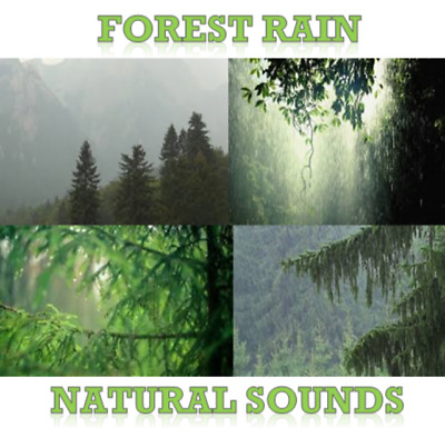 Natural Sounds Forest Rain Cd Relaxation White Noise Sleep Aid Nature