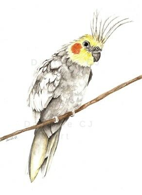 Cockatiel Print - watercolour cockatiel painting australian birds cockatoo art