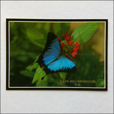 Ulysses Butterfly Cape Hillsborough NQ Murray Views MV Postcard (P355)
