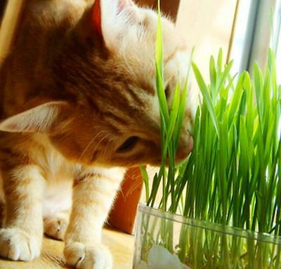 1Bag Harvested Organic Cat snack Cat Grass 30g approx 800 Seeds
