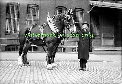 Antique B & W Photo~Clydesdale Show Horse~Work Horse~Harness NEW Lge Note Cards