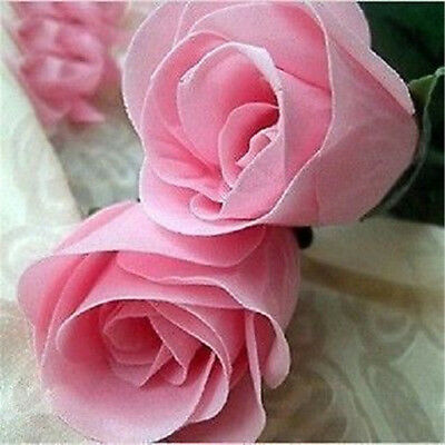 Pink Rose Flower 50 Seeds Plantlet Garden Home Fragrant Free Shipping Beautiful