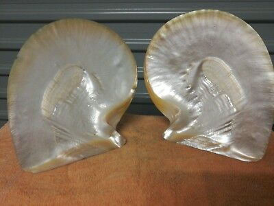 Vintage Large Pair Mother of Pearl Oyster Shell - Seashells, Pearls, Shells