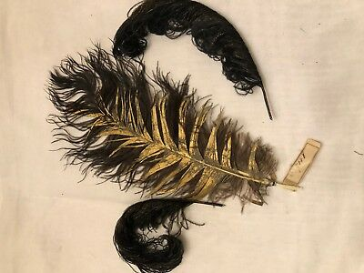 Plumes anciennes