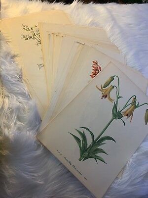 Vintage Botanical Prints Double Sided 41 Total... Priced Per Sheet